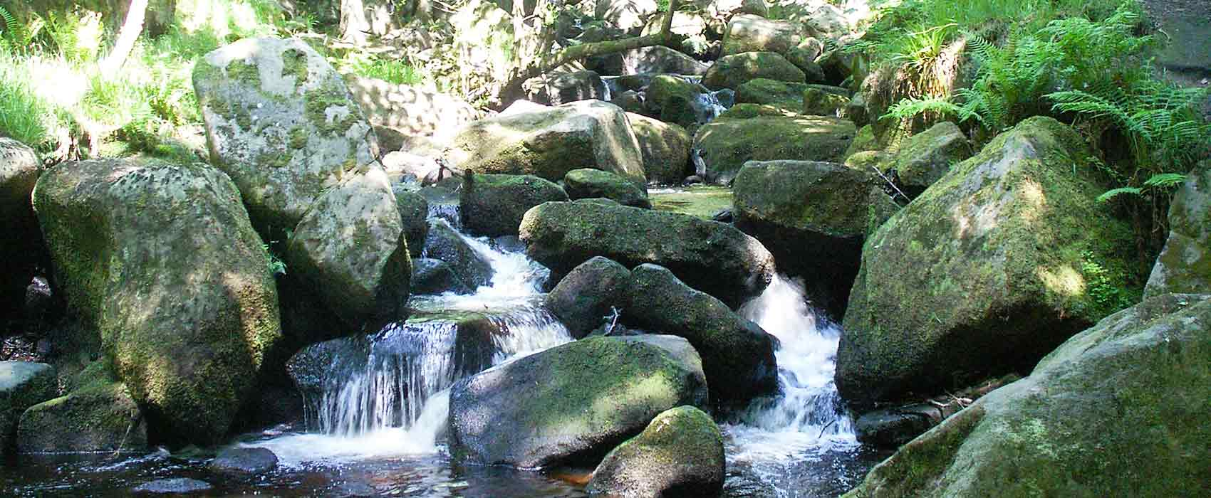 Padley gorge river flowing over moss covered boulders