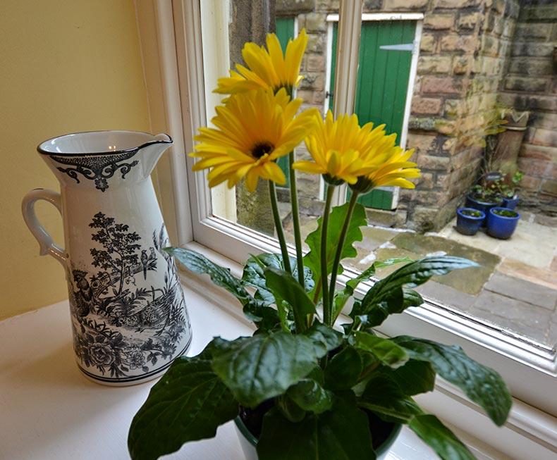 Flowering yellow plant and vintage jug on windowsill