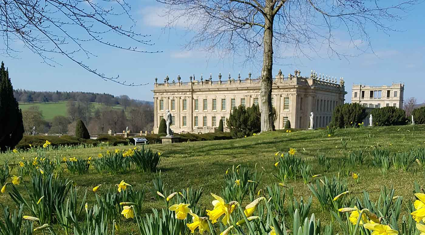 View of Chatsworth House across field of daffodils