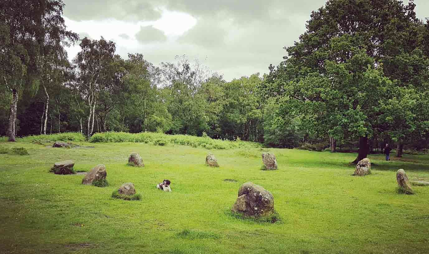 Stone circle at Stanton Moor with dog in the middle