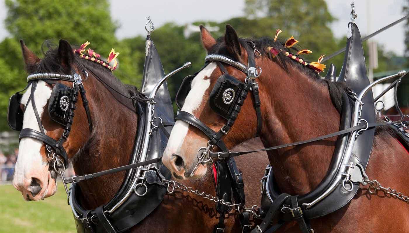 County fair at Chatsworth